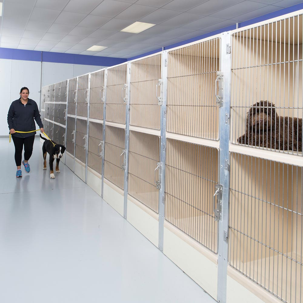 dog boarding wallingford cheshire ct the crate escape. Black Bedroom Furniture Sets. Home Design Ideas