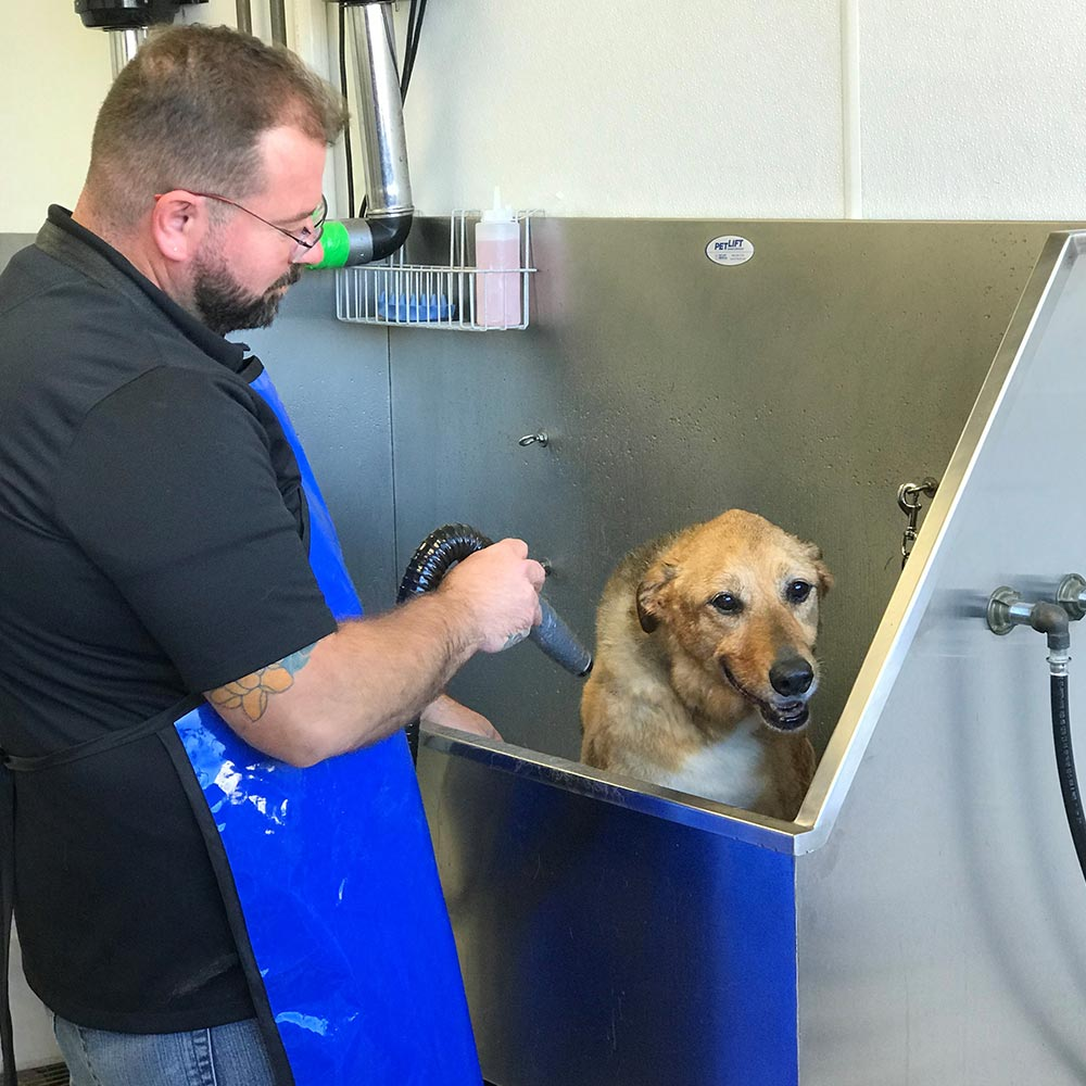 Self serve dog wash wallingford cheshire ct the crate escape dog washing prices solutioingenieria Image collections